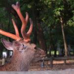 Oh Deer. You will love them in Nara, Japan.