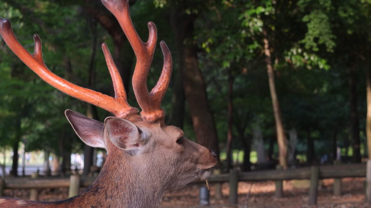 Oh Deer. You will love them in Nara, Japan.