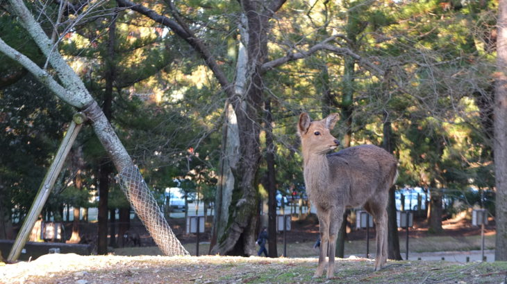 Travel guide! What can we enjoy Nara's night? 6 recommended places in Nara-machi.